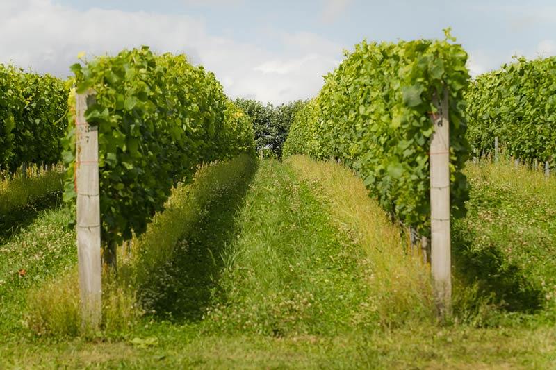 Winery Dorset
