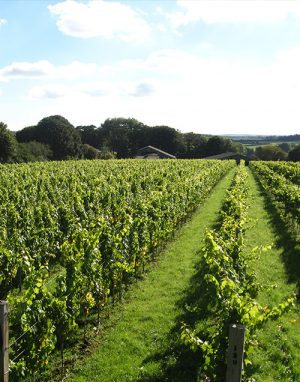 Langham Winery Events